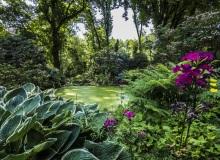 Rainer Lötzsch ArboretumTrautmann #13