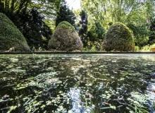 Rainer Lötzsch ArboretumTrautmann #16