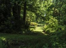 Rainer Lötzsch ArboretumTrautmann #3