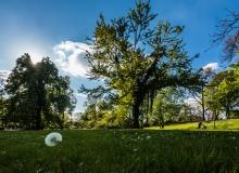 Rainer Lötzsch Gerviniuspark #2